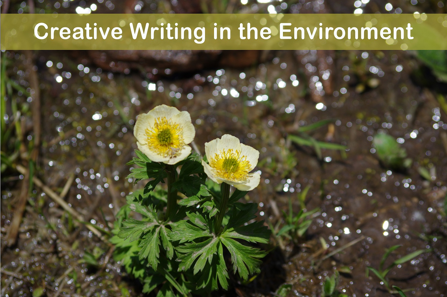 """creative writing in the environment"" course, image features yellow flower"